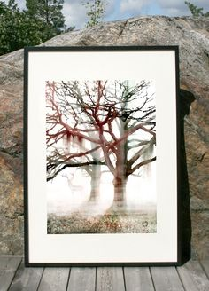 TREE #NordicDesignCollective #camillaedfors #poster #design #
