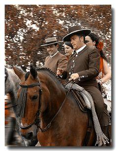 Andalusian Lusitano Lippizzaner spanish horse Piccador