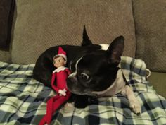 This elf sure gets around!