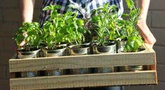 Novos Rurais: Saiba como plantar alguns alimentos a partir das s...