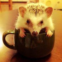 Hedgehog needs coffee as well