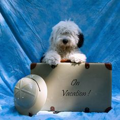 On Vacation ! by dewollewei, via Flickr