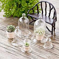 Miniature Glass Cloches   #garden #DIY #terrarium
