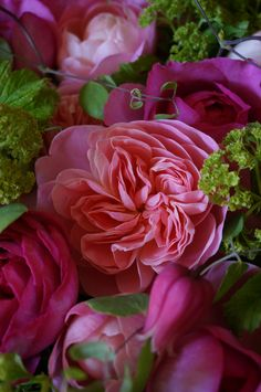 rose and clematis