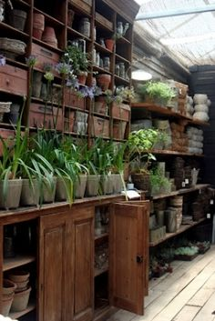 Shed Plans - paradis express Now You Can Build ANY Shed In A Weekend Even If You've Zero Woodworking Experience! Shed Plans - paradis express Now You Can Build ANY Shed In A Weekend Even If You've Zero Woodworking Experience! Greenhouse Benches, Greenhouse Shed, Greenhouse Gardening, Greenhouse Supplies, Garden Benches, Vegetable Gardening, Container Gardening, Organic Gardening, Garden Shop