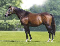 76 Best Sadler S Wells Images In 2019 Wells Horse