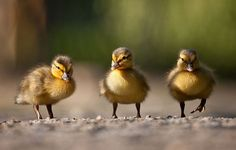 So cute Animals Photography by Robert Adamec