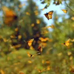 """I never grow tired of butterflies. #MovingArt #Nature #Flowers #butterflies #Earth #Sky #Beauty #Awe #Amazing #Inspiring #Hope #Spectacular…"""