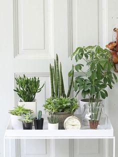Urban Jungle Bloggers: My Plant Gang by @Ricarda | 23QM Stil
