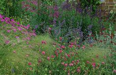 Home Farm. Hampshire. Design: Fiona Lawrenson. Prairie planting. Knautia macedonica. Stipa arundinacea. Geranium. Nepeta. Salvia.