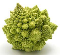 i grande 16038 glaieul traderhorn bio net p3 pinterest lilas plante vivace et bulbes. Black Bedroom Furniture Sets. Home Design Ideas