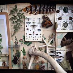 Cavallini Papers Flora Fauna Butterfly Blumen Tiere Schmetterlinge Louvre Dekora
