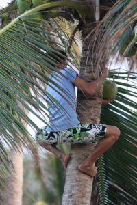 1.) Tropical~Coconut tree climbing in The Philippines