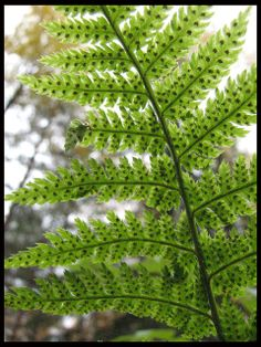 . Plant Leaves, Photograph, Herbs, Photo And Video, Plants, Photography, Photographs, Herb, Plant