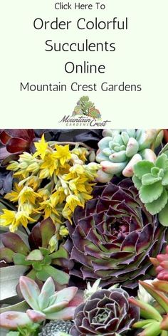 Crassula is a huge and diverse succulent genus with intriguing forms and colors. So easy to grow and propagate. Follow this guide.
