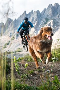 After our surprise success with Paws & Wheels in 2018 many of you begged us for a longer movie or a part II. Longest Movie, Hymer, Mtb, Outdoor Workouts, Australian Shepherd, Mountain Biking, Dogs, Trail, Freedom
