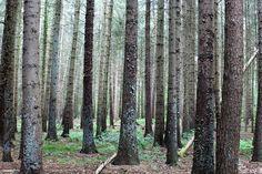 Im Wald Hollesand in Ostfriesland