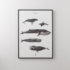 Whale Scale Print | Schoolhouse Electric