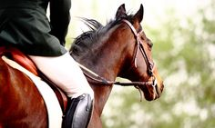Lazy Meadows Farm - Plantation: One, Two, or Three 30-Minute Private Riding Lessons at Lazy Meadows Farm (Up to 56% Off)