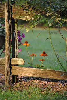 04-19-2016 broken fence with orange echinacea and mixed flowers.