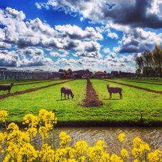 Zoetermeer, richting Balijbos Foto: Petra Simons