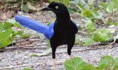 Resultado de imagen para aves exoticas de africa