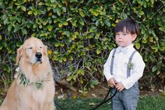 pets at weddings - photo by Shane and Lauren Photography http://ruffledblog.com/romantic-wedding-meets-winery-chic