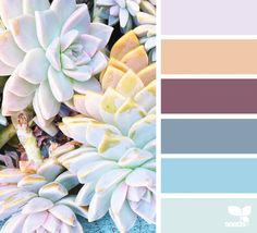 Succulent Hues | Design Seeds