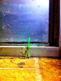 The grass found its way inside away from the cold winter outside :)