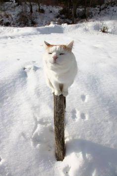 "Shironeko: ""There is no way I am jumping down from here and getting my pawsies frozen. OMMMMMMMMMMMMMMMM"""