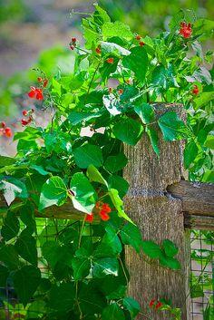 Beautiful foliage and a fence...