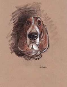 Lovable Basset Hound Looking for a Forever Home by BeccasPlace, $150.00