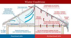 Attic Conditions
