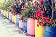 Brightly colored barrels filled with flowering plants. Large Planters, Diy Planters, Painted Trash Cans, Bucket Gardening, Modern Plant Stand, Barrel Planter, Potager Garden, Recycled Garden, The Beach