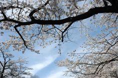 utatuyama,kanazawa,japan  photo by yuko fuji