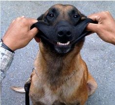 Smile, hero dog! This is MWD Anax, who lost a leg in Afghanistan. His handler, who will be adopting him, still plays with his hero as he did before his injury, and Anax doesn't seem to mind at all. He dotes on his handler, and his handler adores him. Chec