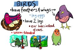 Aves                                                                                                                                                                                 Más