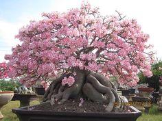 Image from http://1.bp.blogspot.com/-Gh2qau2XMl0/Tydeb9V5yfI/AAAAAAAAASk/3NLPWP2PUzY/s1600/PBN3.jpg.