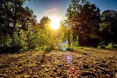 Der Kalenderger Graben bot zum Sonnenuntergang noch weitere schöne Anblicke. Ich mag es wenn die Sonne zwischen den Bäumen durchblitzt und lange Schatten erzeugt.  #olympuscamera #olympusomd #hildesheim #sundown #kalenbergergraben #nature #trees #lake #outdoor