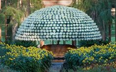 longwood gardens Mum Festival | Bloom Chrysanthemum certainly stole the show at a festival at Longwood ...