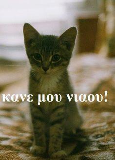 νιαου... Funny Greek Quotes, Funny Picture Quotes, Funny Pictures, Funny Quotes, Love Your Pet, Greek Words, Cute Cats, Haha, Creatures