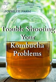 When troubleshooting kombucha problems it's important to know what healthy kombucha is supposed to be like. Using your senses and observation you'll be able to know that your kombucha is safe and healthy. Kombucha Scoby, How To Brew Kombucha, Kombucha Recipe, Kombucha Drink, Kombucha Brewing, Organic Kombucha, Probiotic Drinks, Fermentation Recipes, Homebrew Recipes
