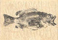 Gyotaku, Japanese fish print: grey snapper