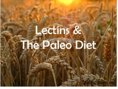 Lectins and the Paleo Diet