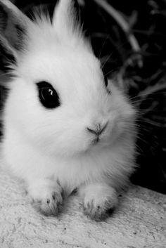 trumblr coelhos - Pesquisa Google