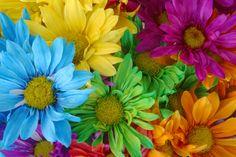 pretty flowers   pretty flowers
