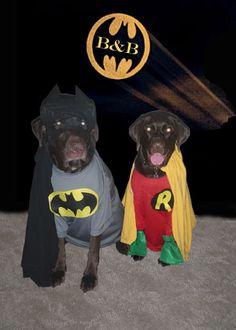 Dog Halloween Costume Contest: Batman and Robin