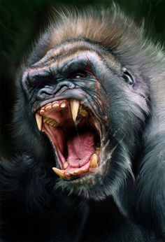 Find high-quality images, photos, and animated GIFS with Bing Images Nature Animals, Animals And Pets, Baby Animals, Gorilla Tattoo, Silverback Gorilla, Mountain Gorilla, Animal Faces, King Kong, Animal Paintings