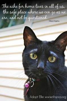 Look at this sweet face and those expressive eyebrows! Can you believe Ellie has been at the New Hampshire SPCA waiting for a home for almost an entire year?   Read all about Ellie here http://www.nhspca.org/pet-spotlight/ #adopt #nhspca #cat #quote