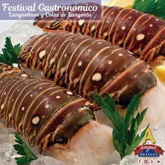Disfruta nuestro #festivalgastronómico, Langostinos y Colas de Langosta con el beneficio que trae nuestro aliado Club Intelecto. #Medellín